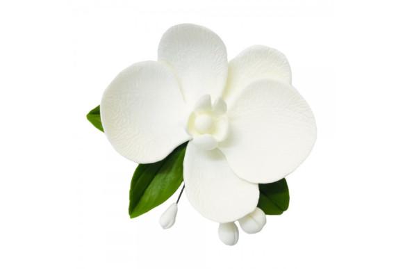 Орхідея з бутонами біла